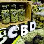 Growing Distribution of CBD Medical and Health Products Provides a Huge Impact on the Market