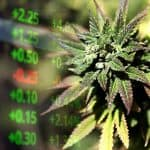 Marijuana Stocks are Growing