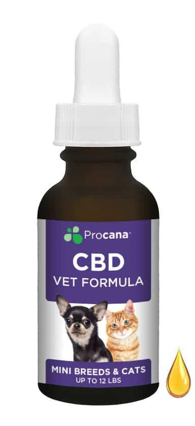 Procana CBD Oil for mini dog and cat