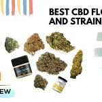 Best CBD Flowers Brands and Strains Selection